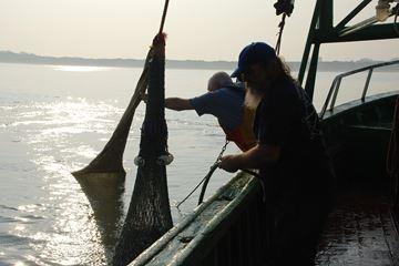 Pêche aux crevettes dans la mer du Nord