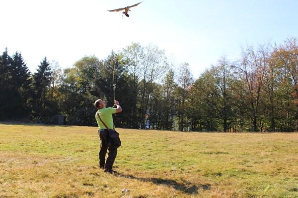 Atelier workshop avec des oiseaux de proie