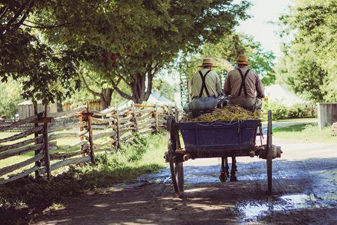 Promenade en calèche et dégustation de vins