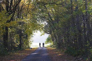 Deux cyclistes dans la forêt