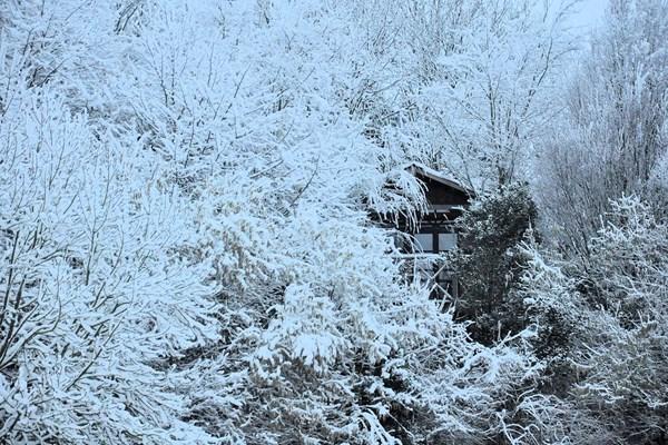 Cabane dans les arbres dans la neige